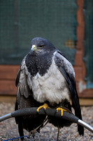 Falconry Day - The Hawking Centre - Kent